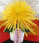 内閣総理大臣賞を受賞した遠藤さんの「彩胡流星」