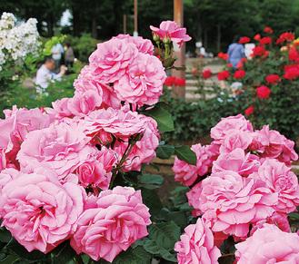 色とりどりの花が咲き誇る=5月17日、相模原北公園