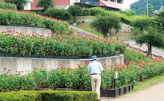 9月中旬まで花々を楽しめる