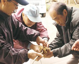 贈呈する桜の苗木を手入れする「尾崎行雄を全国に発信する会」のメンバー
