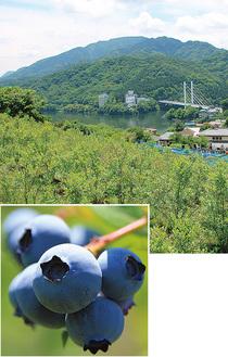 ㊤相模湖を一望/㊦甘い果実
