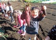 園児30人が芋堀体験