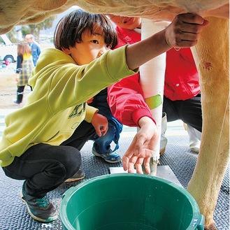 学んだコツを生かしながら乳を搾った=2月14日、青野原小学校校庭で