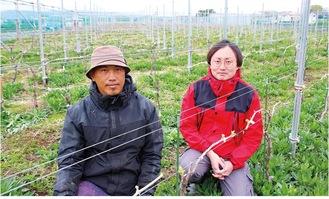 純相模原ワイン生産をめざし市内で試験含め17品種の醸造ブドウを栽培する森山さん(右)と町田さん=2日、緑区田名