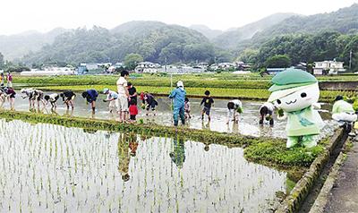 葉山島で田植え体験