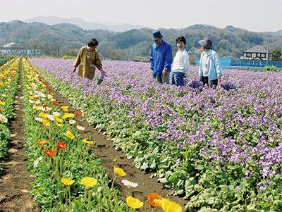 紫が広がる花畑