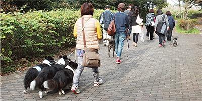 「犬と散歩」生かし健康づくり