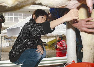 児童が牛とふれあい