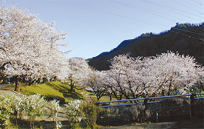 津久井湖1年の写真を募集