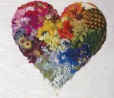 色とりどりの押し花展示