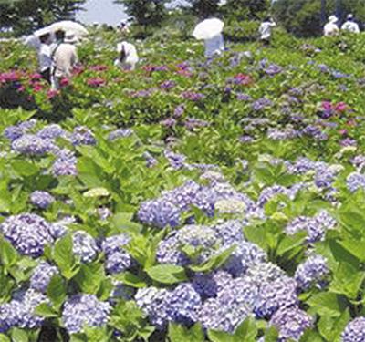 色鮮やかな花の祭典
