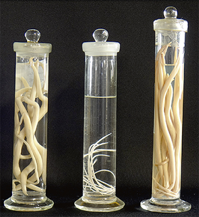 「寄生虫」の進化をたどる