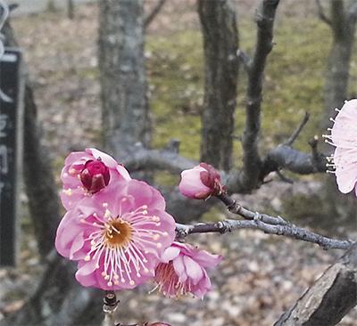 小さい春の訪れ