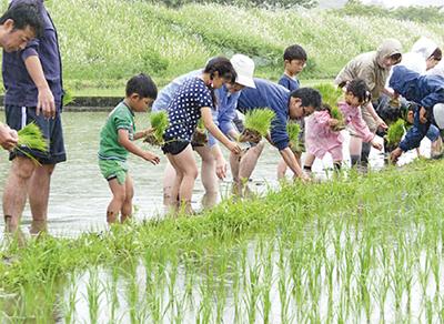 葉山島でお米作り