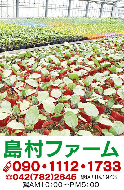 """""""野菜苗""""24日販売開始品質の良さが自慢です"""