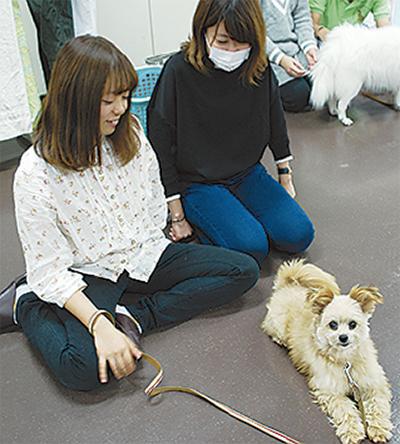 被災地の「保護犬」里親募集