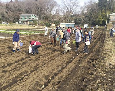 ジャガイモ植えに挑戦