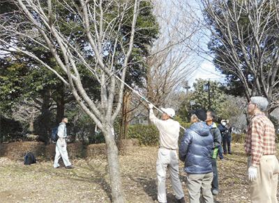「桜の守り人」 第2期募集