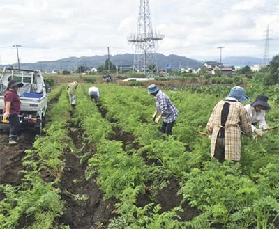 農業体験の参加募集