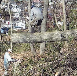 間伐を行い森の再生も行っている(提供写真)