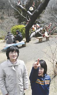 やっと咲き出した梅(3月 11日撮影)