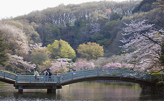 市長賞を受賞した田之上茂さんの「桜」