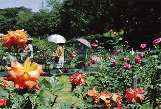 様ざまな種類のバラが楽しめる(5月19日撮影)