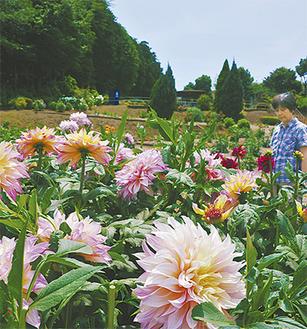 色とりどりの花が楽しめる(21日撮影)