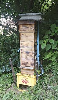 町田蜂友会が育てている蜂箱(提供写真)