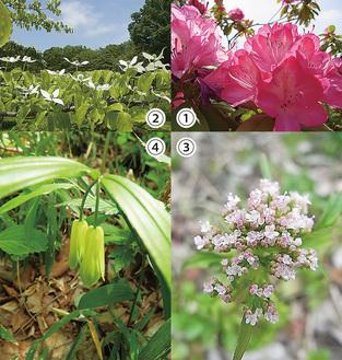 町田市の近郊で楽しめる草花たち