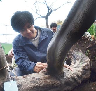 木に印を付ける田中さん