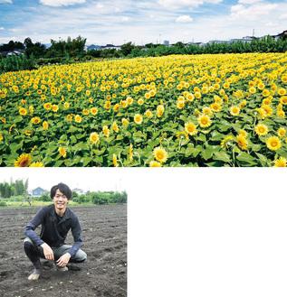(上)畑一面に咲いたひまわり(昨年)(左)発芽を知らせる横田貴洋さん
