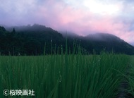 映画「天に栄える村」