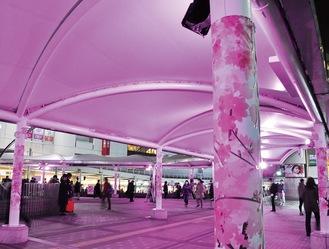 桜色にライトアップされたテントと桜柄の支柱(19日)