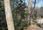 ナラ枯れ被害を受けた木