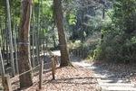 園路に沿った木の被害も多い