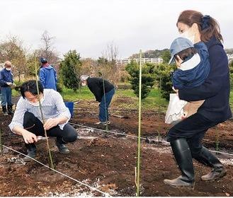 山梨県から取り寄せた苗木50本を植樹した