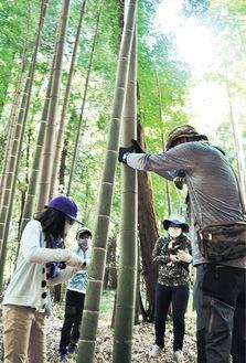 家族で力を合わせて竹を切る