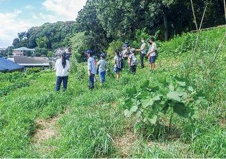 夏野菜の収穫の様子