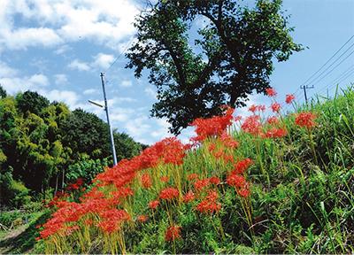 花と木と祭り