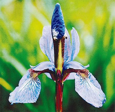 「身近な花の彩」