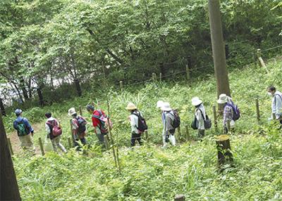小山田緑地で癒し散策