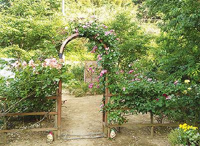 麻生区岡上の限定バラ園