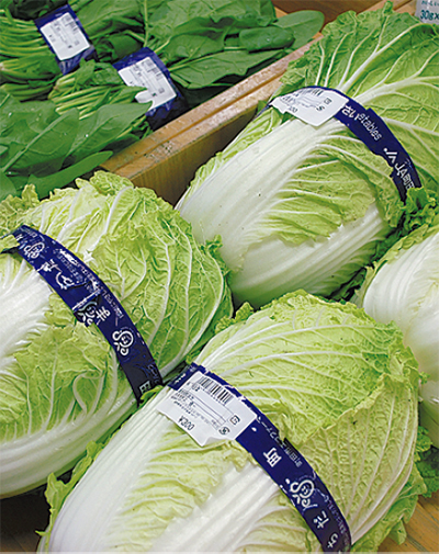 冬野菜どっさり