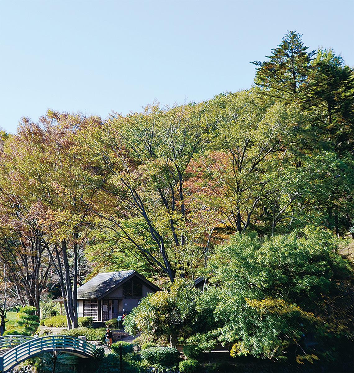 色づく秋に魅せられて