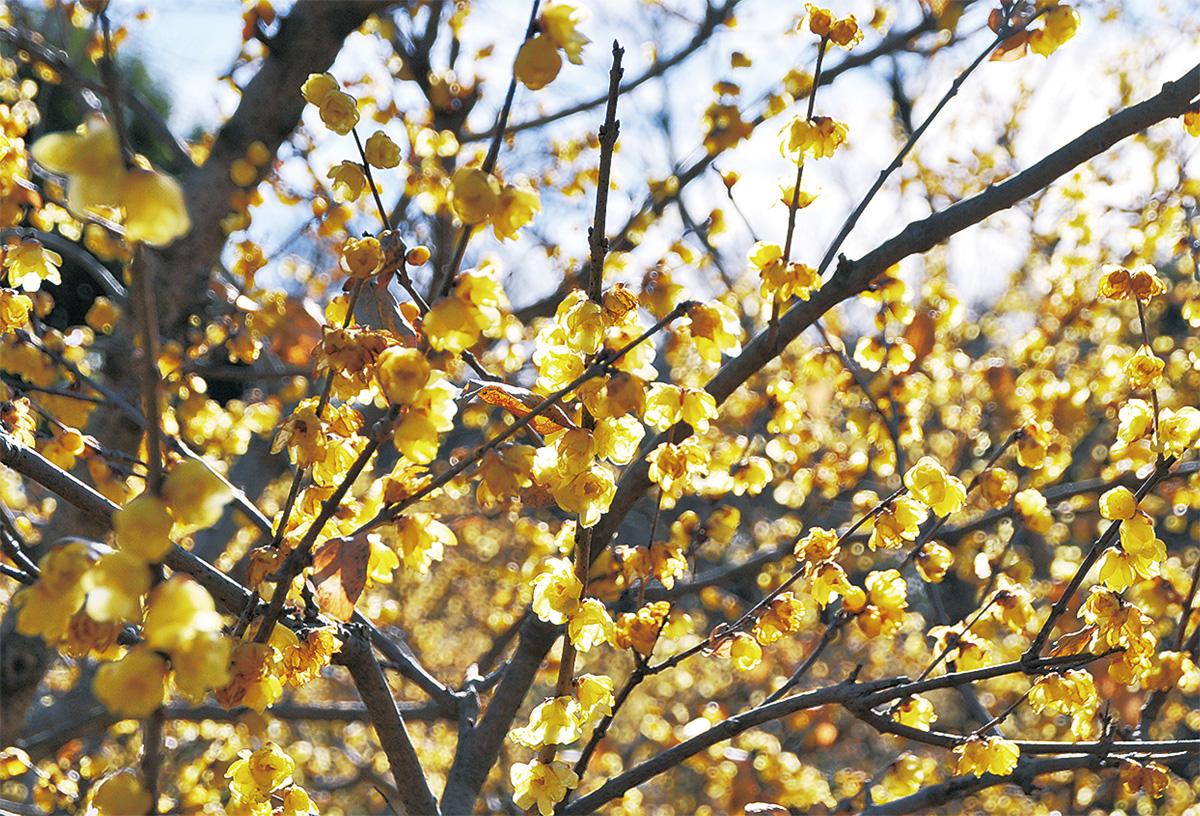 黄色の世界へ