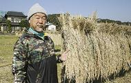 清流復活米で味わう