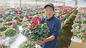 石川さんとシクラメン。ハウス2棟いっぱいに咲き誇っている