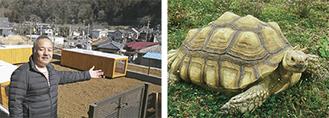 整備中のカメが入るゾーンを案内する丸山さん。園内には駐車場や亀の石像も(左)/ケヅメリクガメ(右)