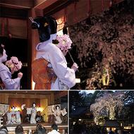 夜桜と芸者衆
